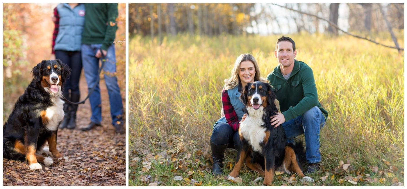 A couple pose with their St. Bernard dog amonst grass and leaves